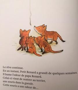 Petit renard_extrait 2.jpg