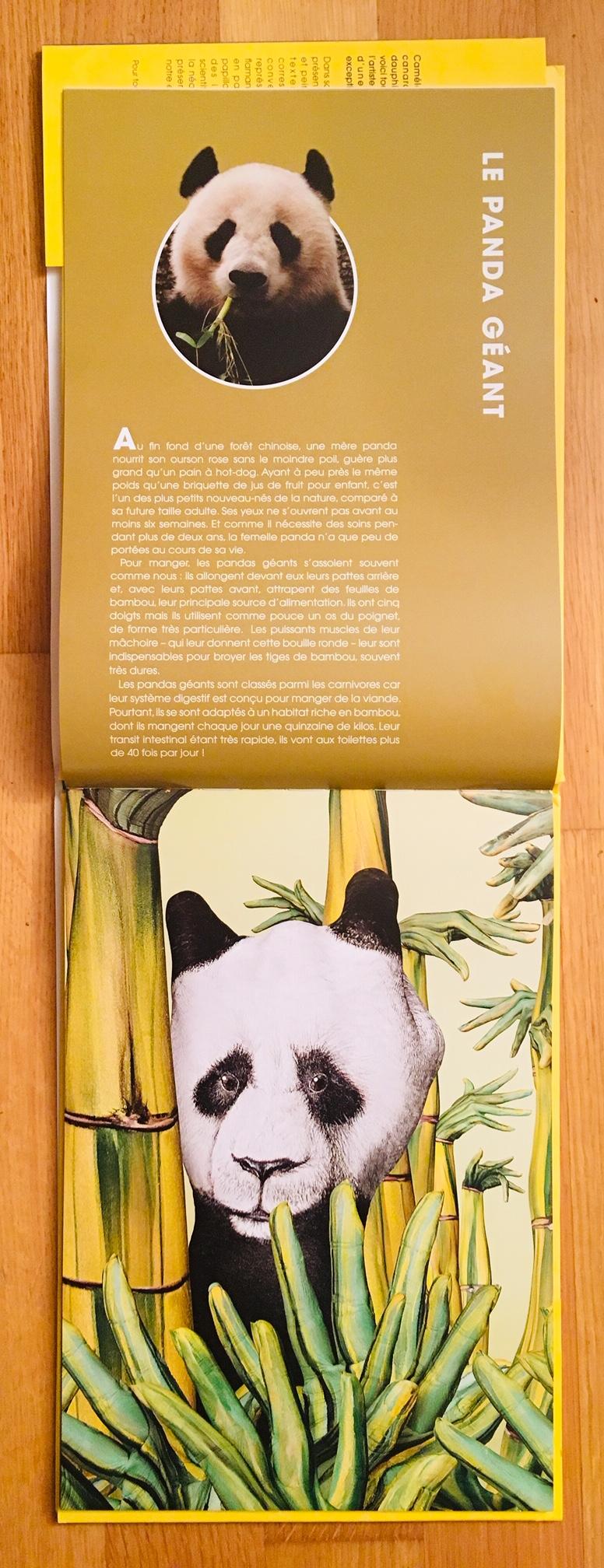 Animains_panda géant